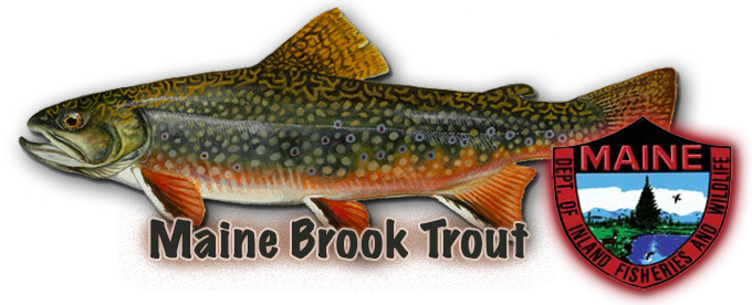 Maine Native Brook Trout
