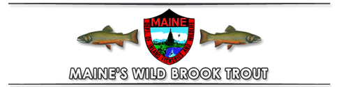 maine brooktrout