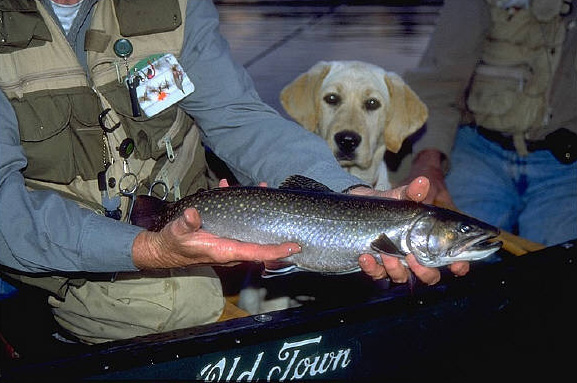 Old-Town-Trout-Huntress
